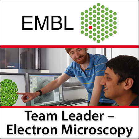 Team leader in Electron Microscopy Service and Technology Development